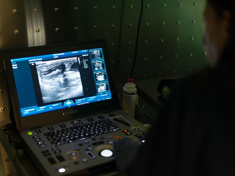 diagnóstico por imagen | Clinica Veterinaria Marbella mediVET