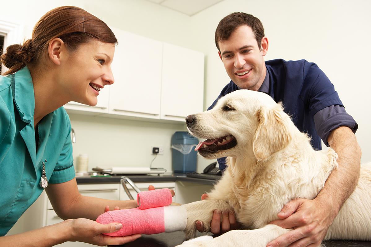 traumatologia veterinaria marbella