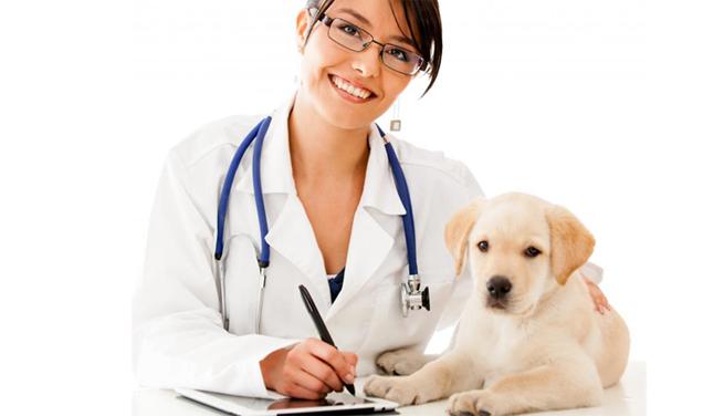 Consulta general y especializada Veterinaria Marbella mediVET